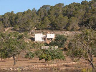 Im Sommer ist es traditionell extrem trocken auf Ibiza - das sieht man überall augf der Insel. Die Anzahl der Touristen 2016 bringt die Wasserversorgung jetzt noch früher an ihre Grenzen. (Foto: Markus Burgdorf)